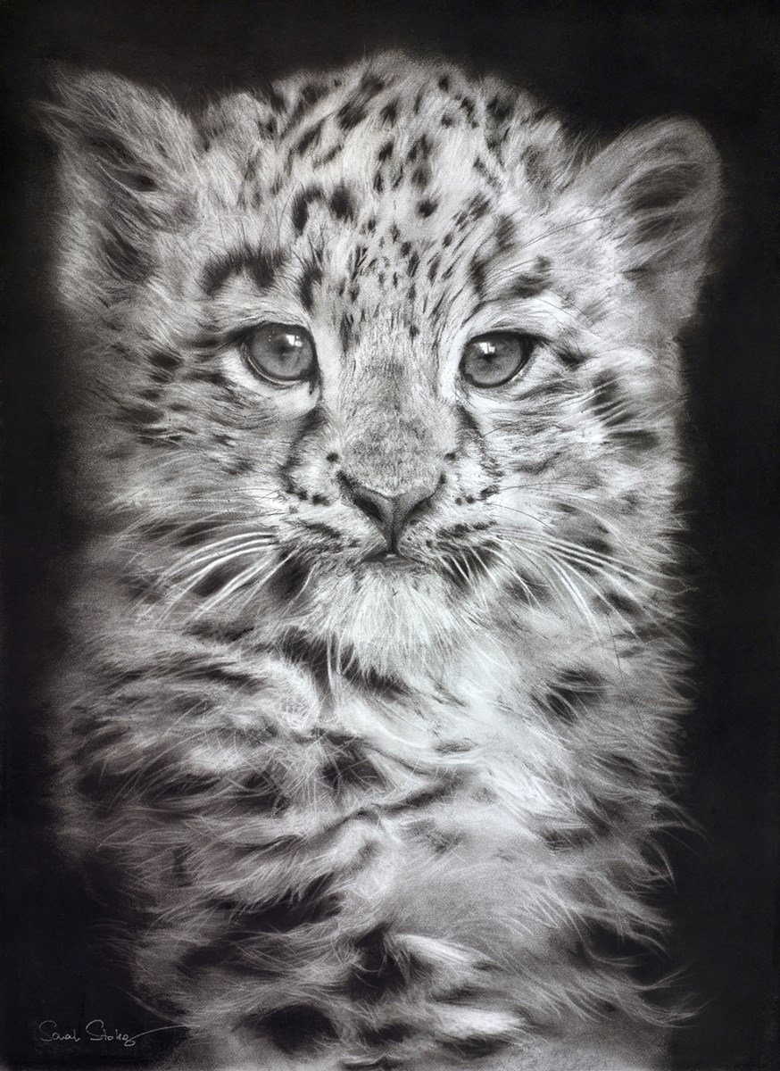 Snow Leopard by sarah stokes -  sized 22x30 inches. Available from Whitewall Galleries